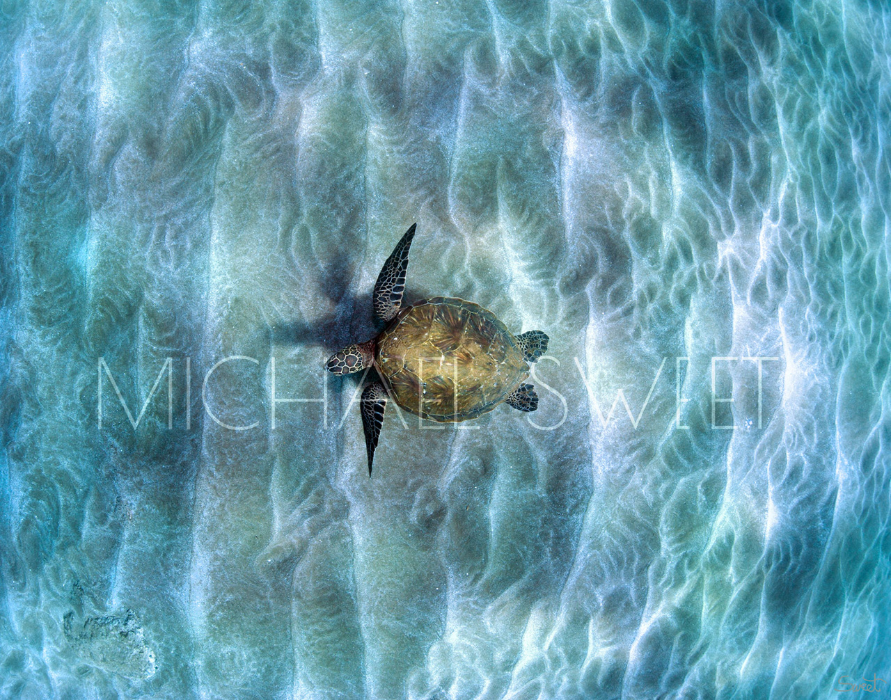 Photograph of Hawaiian sea turtle seen from above