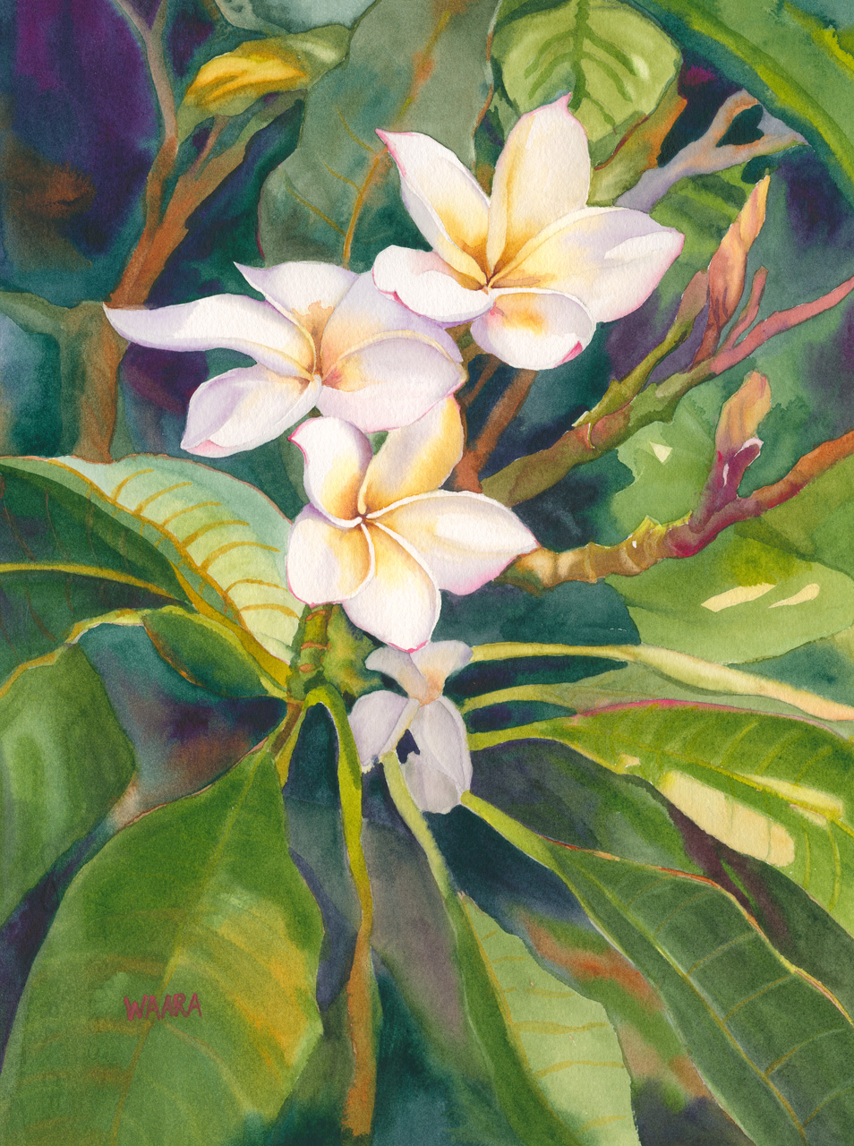 Watercolor painting of white plumeria flowers