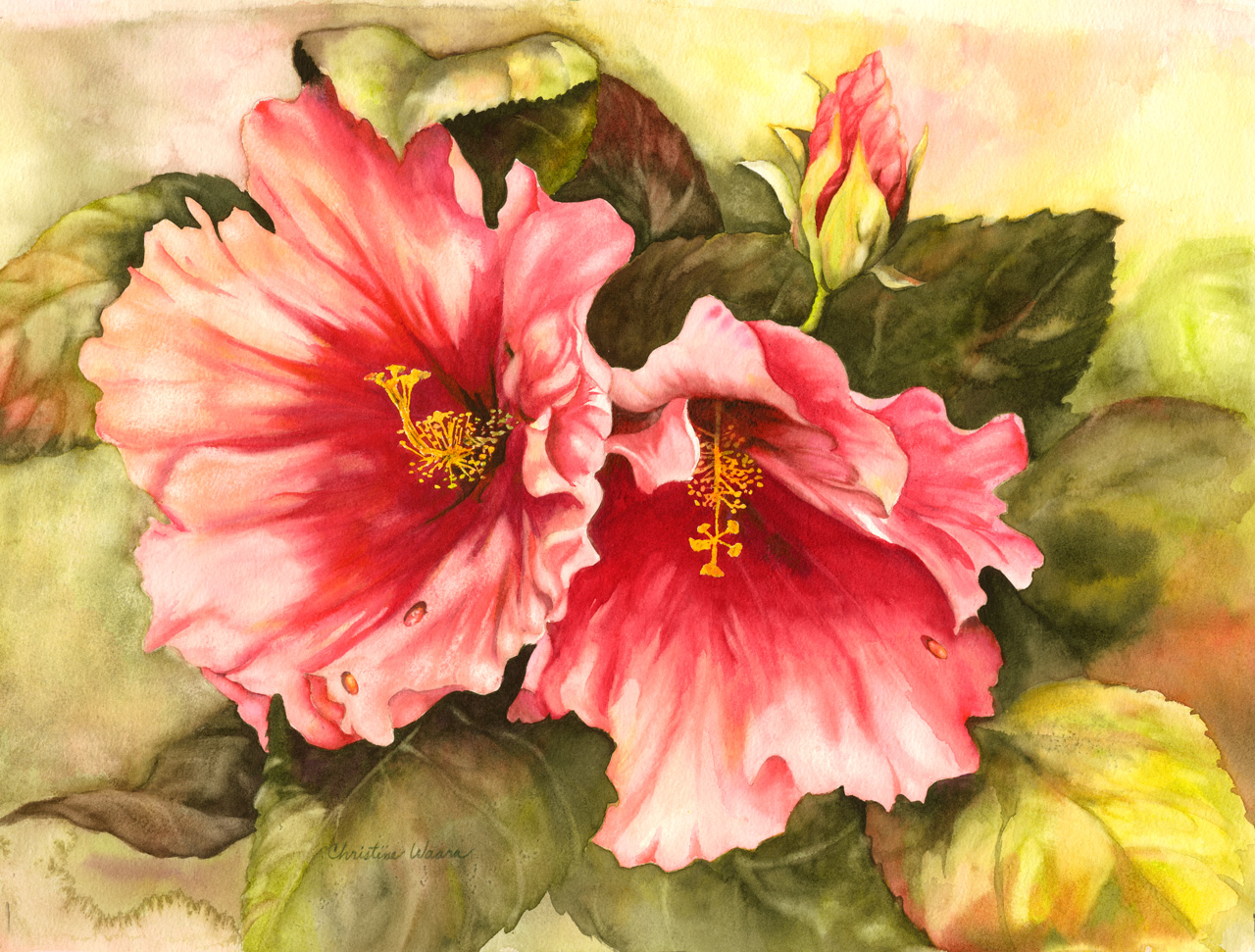 Watercolor painting of two hibiscus flowers