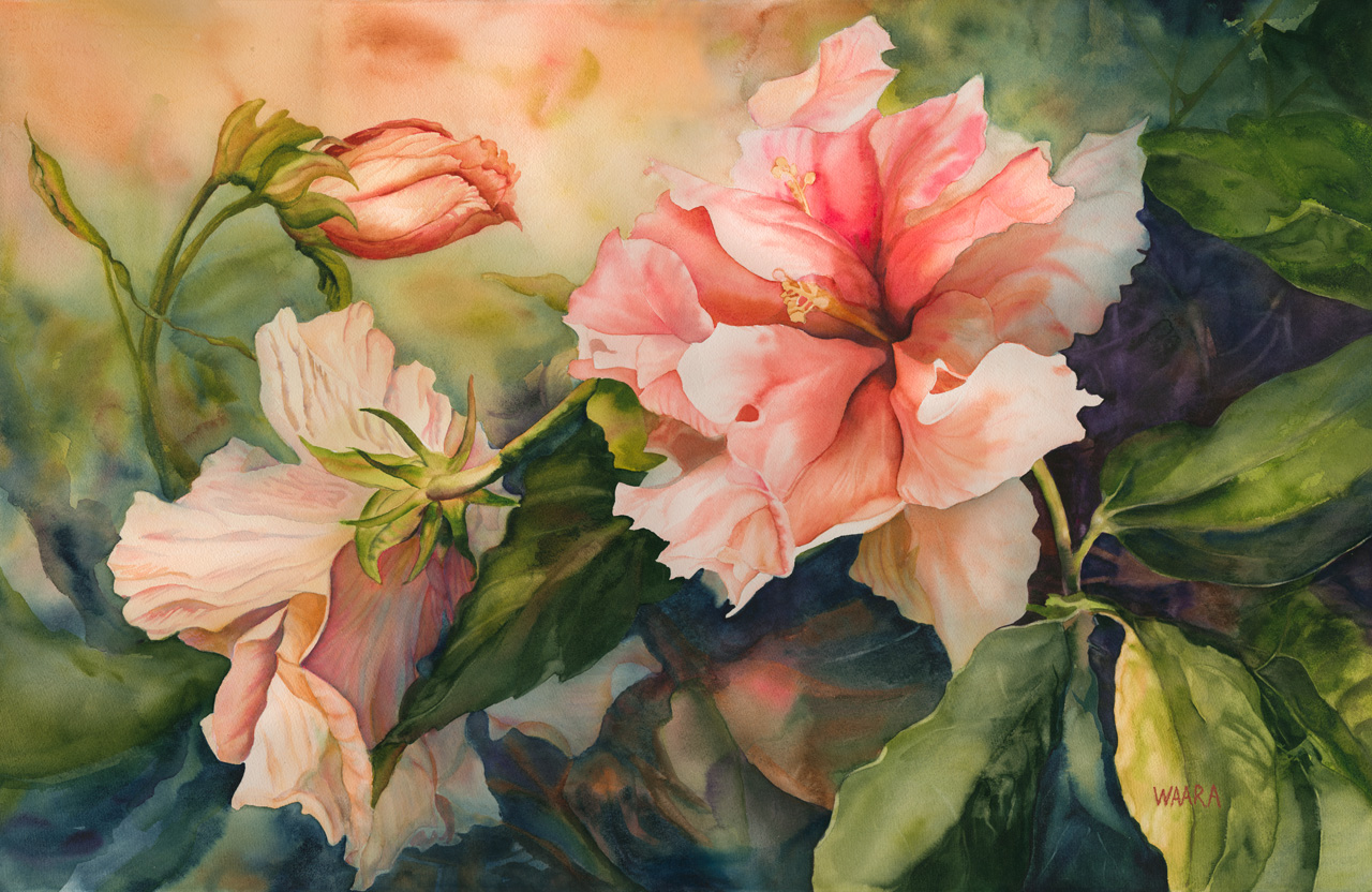 Watercolor painting of Kona Double Hibiscus flowers