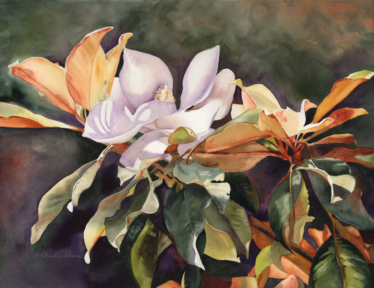 Watercolor painting of magnolias blooming on tree