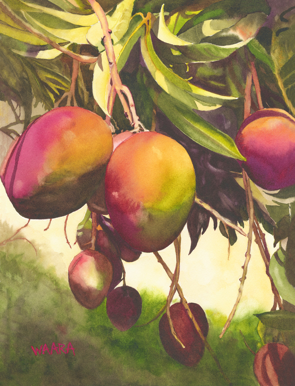 Watercolor painting of mangos hanging from a tree
