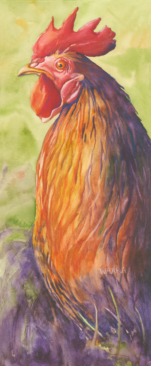 Watercolor painting of road island red rooster