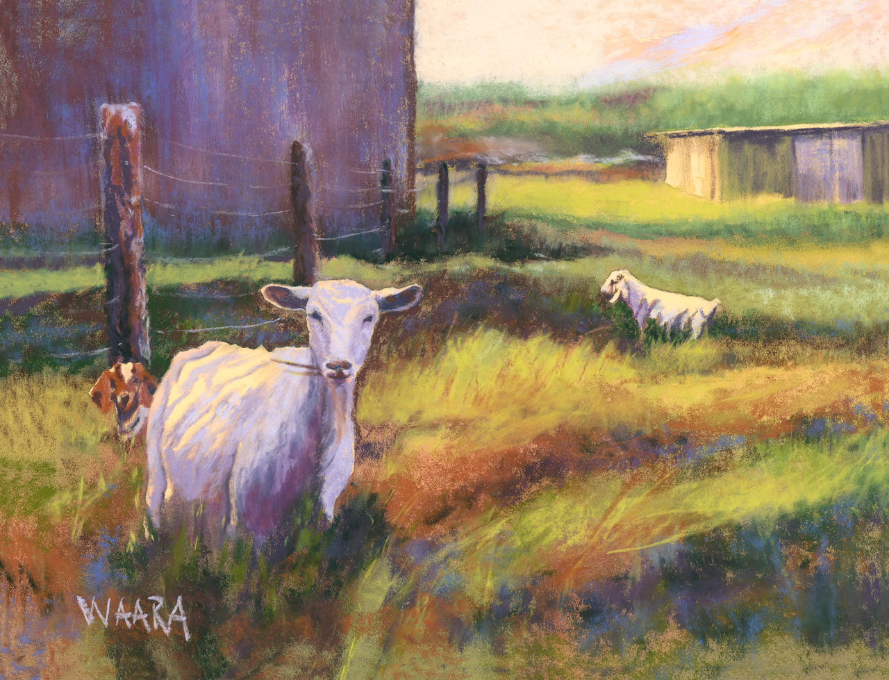 Soft pastel painting of three goats in a farmer's field in upcountry Maui Hawaii