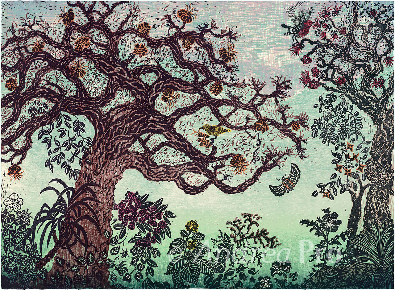 The Magical Wiliwili Forest by Andrea Pro hand pulled print of a wiliwili tree