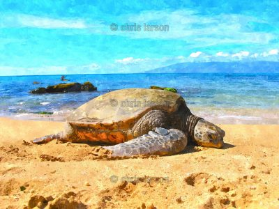 Honu Beach by Chris Larson