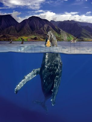 Whalewatch Magazine Cover by Marty Wolff of a whale breaching seen above and below water