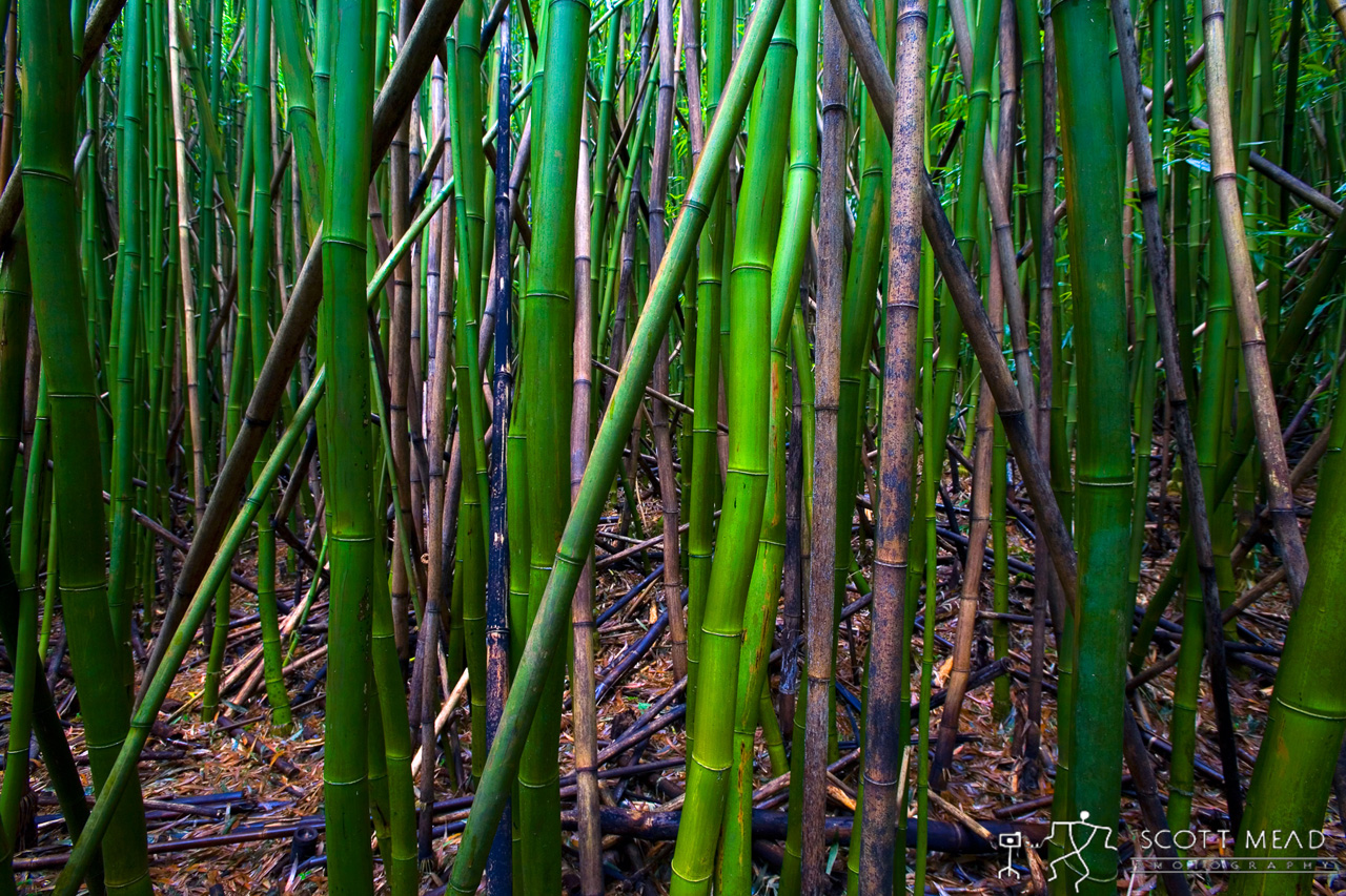 Bamboo You by Scott Mead