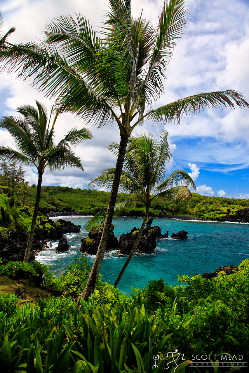 Waianapanapa Palms by Scott Mead