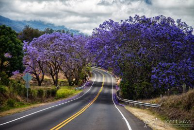 Jacaranda Road by Scott Mead