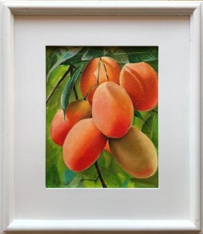 """Mango Tango"" by Steve Rinaldi - SMR223"