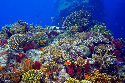 "A vibrant coral reef shines in this photo titled ""Coralhead"" by Marty Wolff."