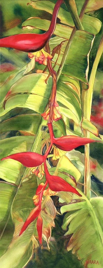 """""""Hanging Firelight Heliconia"""" by Christine Waara - CW190"""